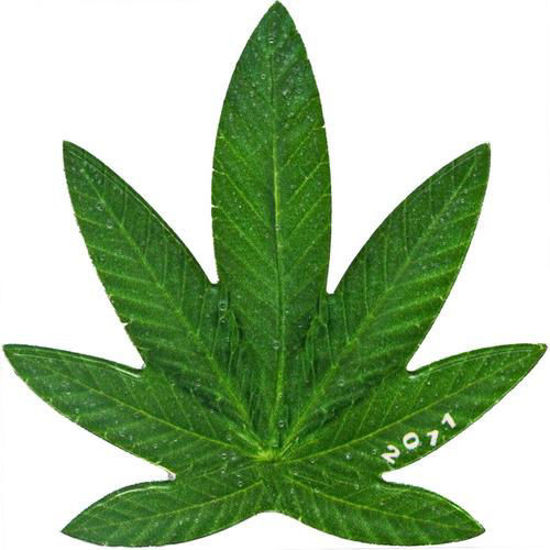 "Picture of Монета ""Конопля - Марихуана - Cannabis sativa"" 17 грамм, 2011 г."